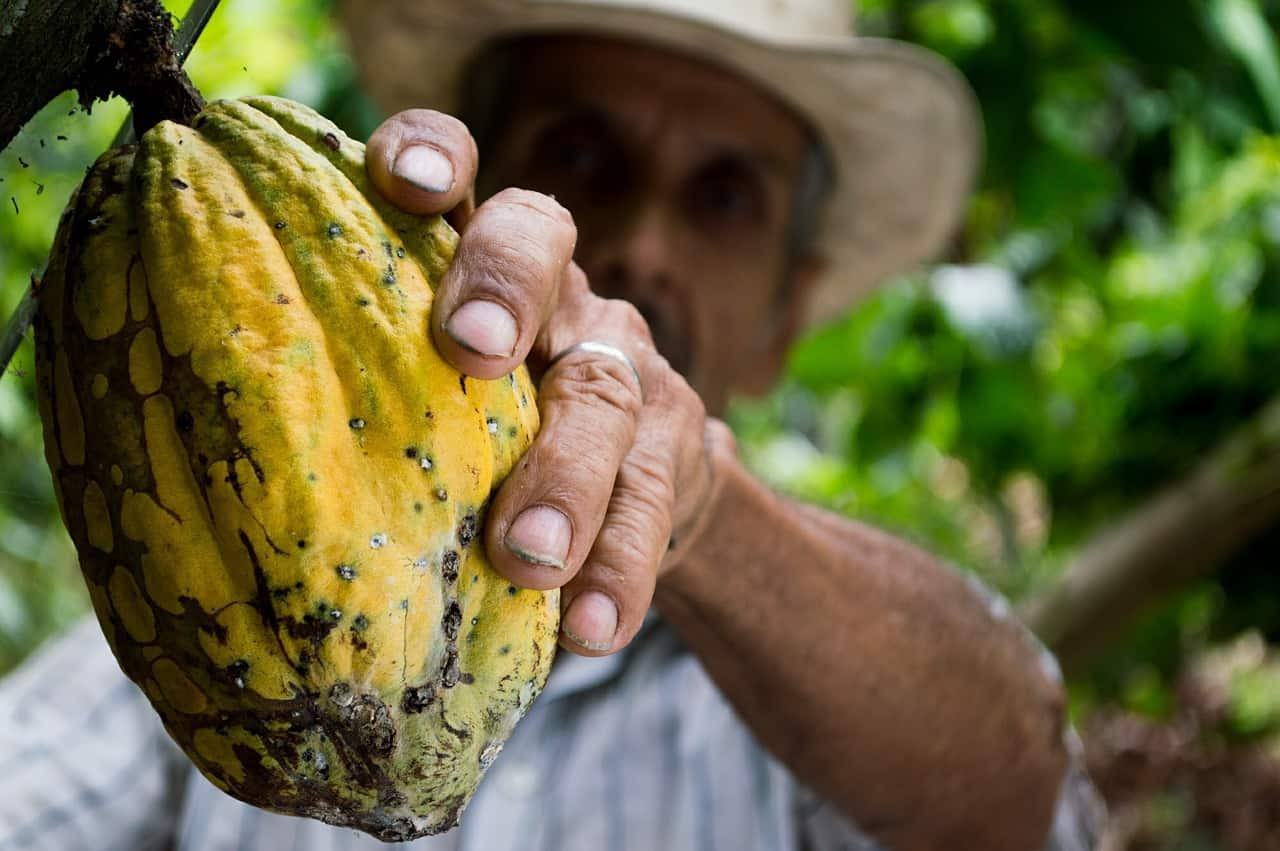 Man with cocoa seed