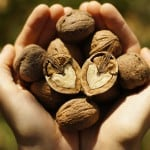 Why You Should Eat Walnuts Every Day