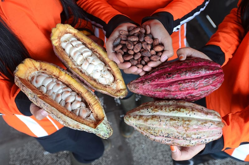 Cacao pods and beans