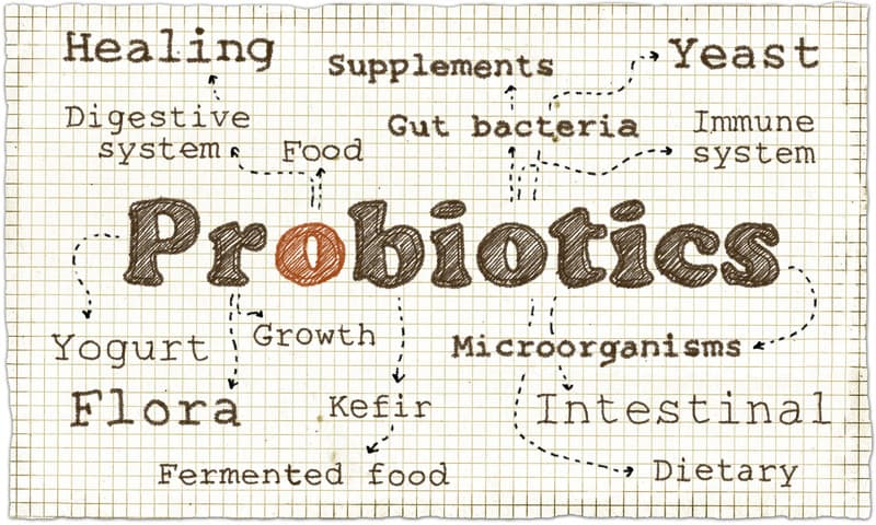 Illustration of probiotics
